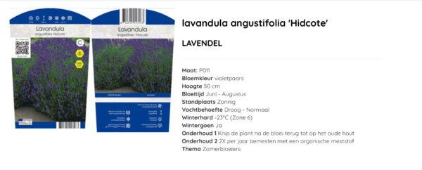Lavendel Hidcote 11x11 cm pot met kleuren etiket