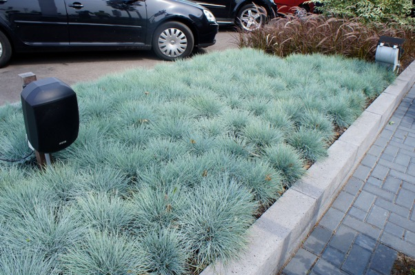 Intense Bleu, geeft u het mooiste tapijt in u tuin