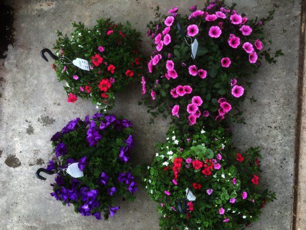 Reuzengrote Hangplanten van €13,95 nu voor slechts €11,00