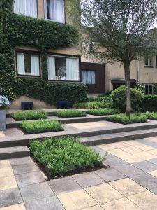 ILEX crenata ''Luxus Globe'' de nr 1 in vakken vullen en lage hagen. Bij tevreden klant in Velp bij Arnhem ILEX crenata ''Luxus Globe'' de nr 1 in vakken vullen en lage hagen.