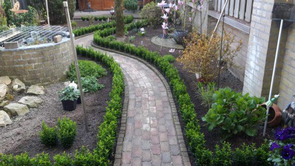 Strakke euonymus tuinen, afkomstig van de Buxuskoning., deze mooie tuin staat in Huissen bij Arnhem.