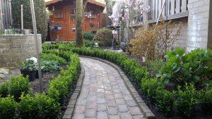 Dankjewel Buxuskoning, voor het thuisbrengen van deze mooie volle Euonymus planten, liefst 7 planten in één pot,