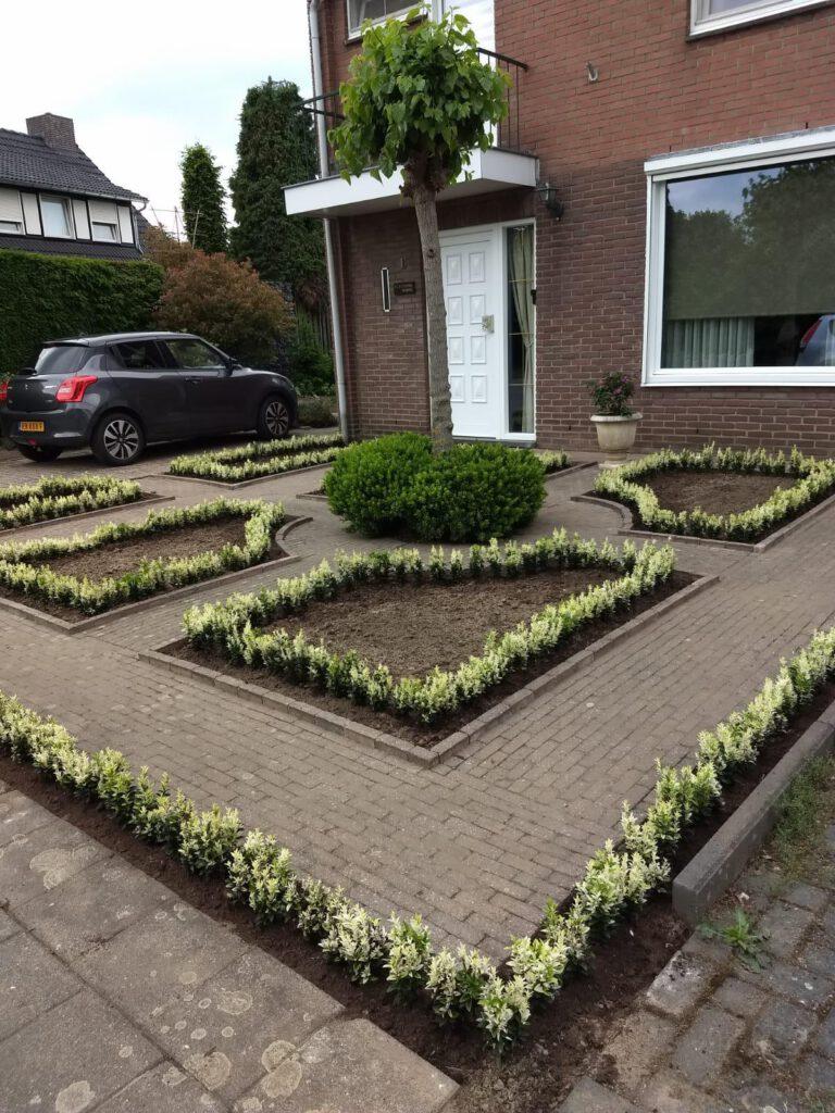 Euonymus Paloma Blanca , begin juni 2021 geplant door klant zelf in Zuiden van Limburg