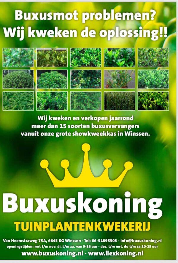 GRATIS boekje , 16 pagina's van de Top 15 ILEX en Buxusvervangers