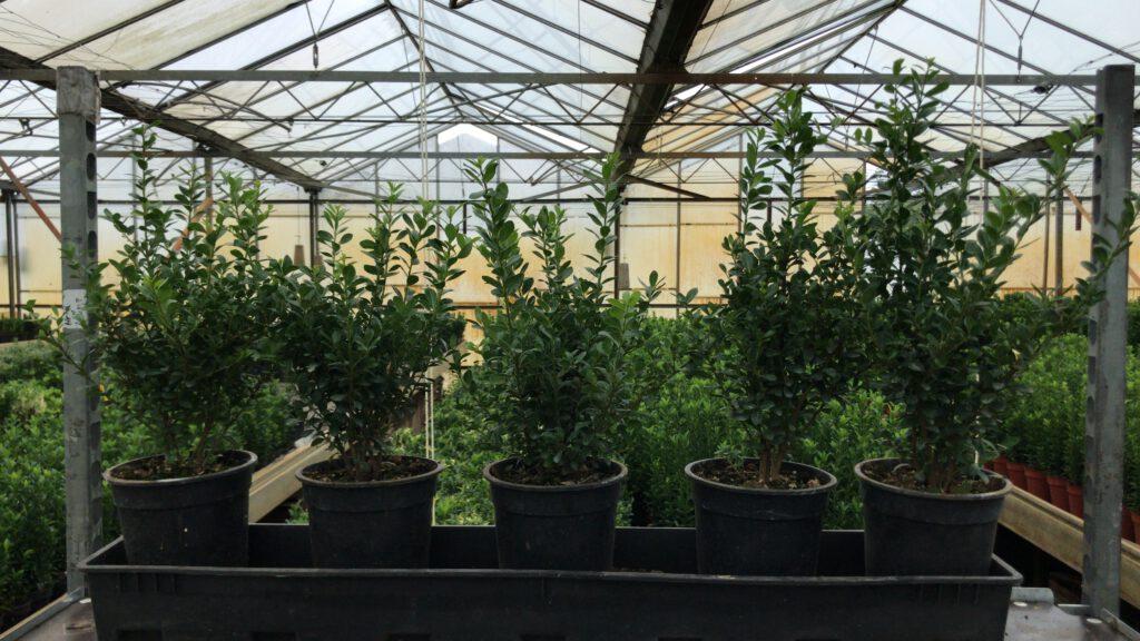 Planten in grotere potten groeien veel beter door dan kleine plantjes