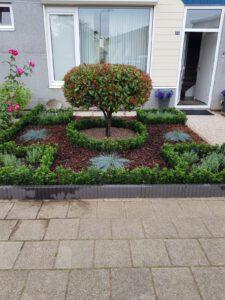 Doe het zelf tuin door klant uit Doesburg (Gelderland) ze hebben de Euonymus ''Green Spire''planten zelf uitgezocht op de kwekerij in Winssen.