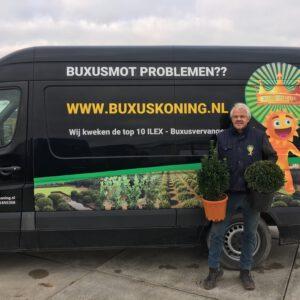 Promotie , Buxuskoning