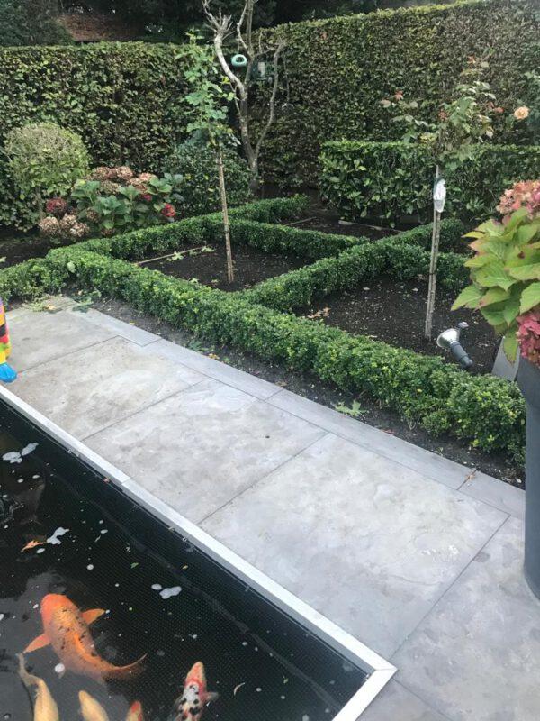2019 geplant in Amstelveen , 17 cm pot met ilex Caroline Upright, Nu 2020 al een mooie strakke haag.