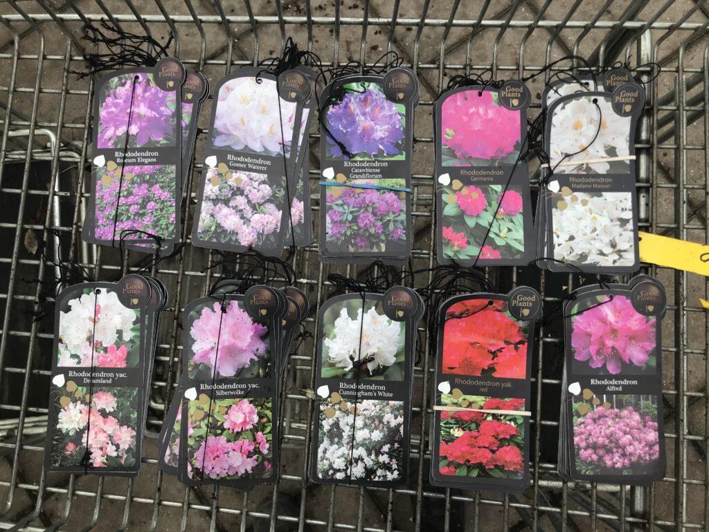 10 soorten rhododendron