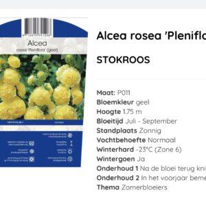 Alcea rosea Pleniflora Geel, dubbel bloemige stokroos