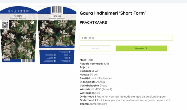 Gaura lang en rijkbloeiendetuinplant